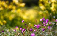 Summer Flowers Wallpaper 13 Widescreen Wallpaper