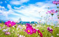 Summer Flowers Wallpaper 14 Free Hd Wallpaper
