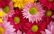 Summer Flowers Wallpaper 23 Background