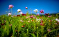 Summer Flowers Wallpaper 34 Cool Wallpaper