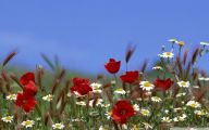 Summer Flowers Wallpaper 8 Cool Wallpaper