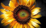 Sunflower Wallpaper 26 Wide Wallpaper