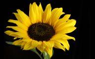 Sunflower Wallpaper 32 Background