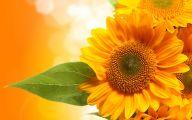 Sunflower Wallpaper 36 Background Wallpaper