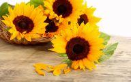 Sunflower Wallpaper 45 Cool Hd Wallpaper