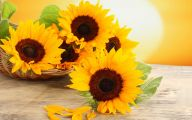 Sunflowers 22 Wide Wallpaper