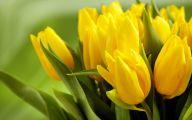 Tulip Wallpaper 14 Cool Wallpaper