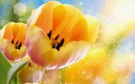 Tulip Wallpaper 31 High Resolution Wallpaper