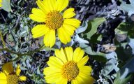 Types Of Yellow Flowers 43 Background Wallpaper