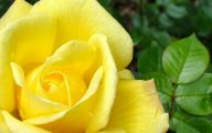 Types Of Yellow Flowers 48 Hd Wallpaper