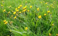 Weed With Yellow Flowers 18 High Resolution Wallpaper
