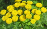 Weed With Yellow Flowers 27 Background Wallpaper