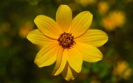 Weed With Yellow Flowers 30 High Resolution Wallpaper
