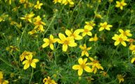 Weed With Yellow Flowers 36 Background