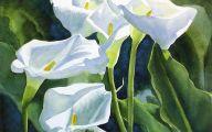 White Calla Lily 35 Wide Wallpaper