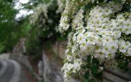 White Floral Wallpaper 14 Hd Wallpaper