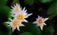White Floral Wallpaper 44 Desktop Wallpaper
