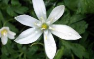 White Lily 4 High Resolution Wallpaper