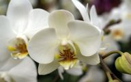 White Orchid 3 High Resolution Wallpaper