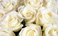 White Rose 18 Desktop Wallpaper