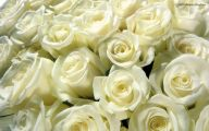 White Rose 20 Background