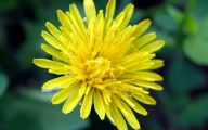 Wild Yellow Flowers 11 Cool Wallpaper