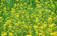 Wild Yellow Flowers 23 Background