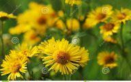 Wild Yellow Flowers 35 Desktop Background