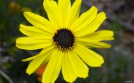 Wild Yellow Flowers 36 Widescreen Wallpaper