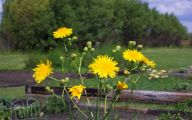Wild Yellow Flowers 4 Free Wallpaper