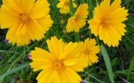 Wild Yellow Flowers 7 Desktop Background