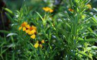 Wild Yellow Flowers 9 Background