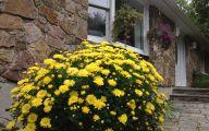 Yellow Flower Perennial 22 Widescreen Wallpaper