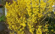 Yellow Flower Shrub 16 High Resolution Wallpaper