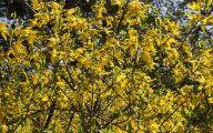 Yellow Flower Shrub 17 Background Wallpaper