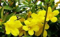 Yellow Flower Shrub 22 Background Wallpaper