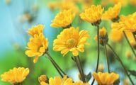 Yellow Flower Wallpaper 6 Desktop Wallpaper