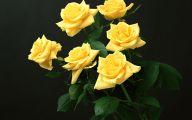 Yellow Roses 17 Desktop Background