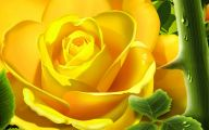 Yellow Roses 26 Wide Wallpaper