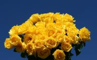 Yellow Roses 3 Cool Wallpaper