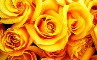 Yellow Roses 9 High Resolution Wallpaper