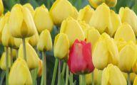 Yellow Tulips 14 Cool Hd Wallpaper