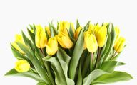 Yellow Tulips 20 High Resolution Wallpaper