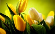Yellow Tulips 32 Free Wallpaper