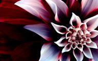 Beautiful Dark Flowers  1 Free Wallpaper