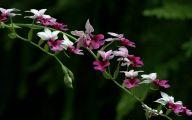 Beautiful Dark Flowers  13 Background