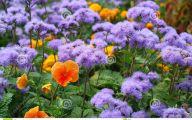Beautiful Dark Flowers  15 Free Hd Wallpaper