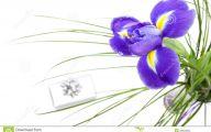 Beautiful Dark Flowers  19 Hd Wallpaper