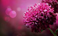 Beautiful Dark Flowers  2 Free Wallpaper