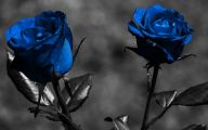 Beautiful Dark Flowers  5 Free Wallpaper